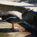 IMG_5891 鳥インフル流行。。。うがいしとこ!