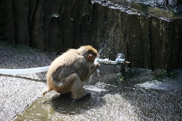 IMG_0020 カルキ臭い水の味