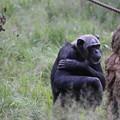 IMG_0372 待ちチンパンジー来たらず