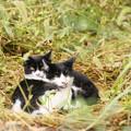 IMG_0708 おしゃれ横丁の連れネコさん