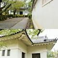 Photos: IMG_0647 小田原城土塀の風景