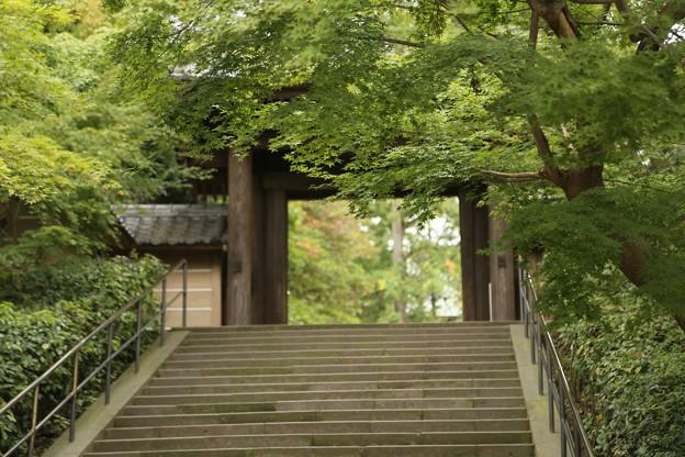IMG_0724 円覚寺総門と青紅葉