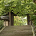 Photos: IMG_0724 円覚寺総門と青紅葉