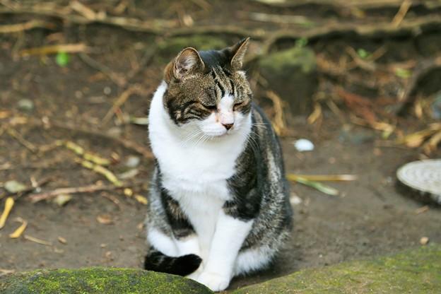 IMG_0752 しかとネコさん