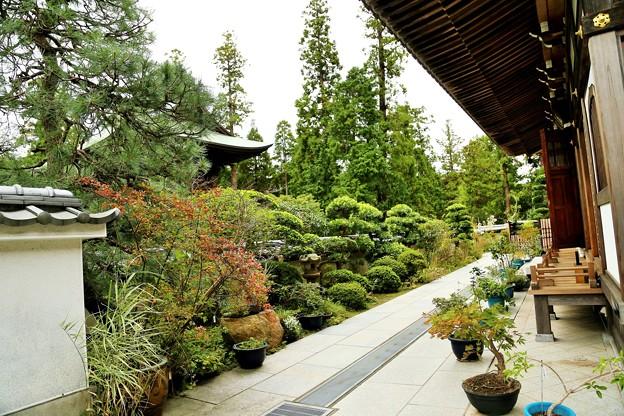 IMG_0796 円覚寺・秋の植物 展示場