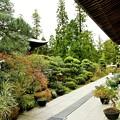 Photos: IMG_0796 円覚寺・秋の植物 展示場
