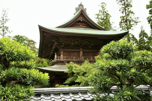 IMG_0810 円覚寺「イヌマキ」