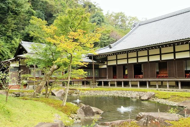 IMG_0944 円覚寺の庭園ー1