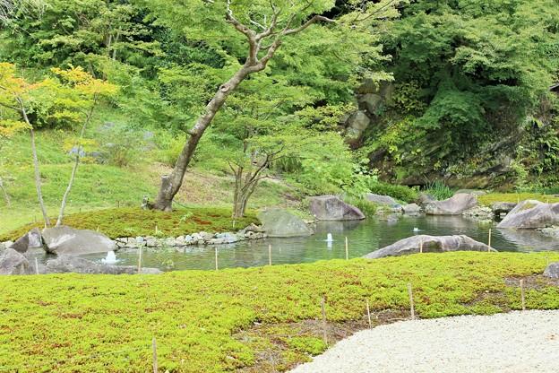 IMG_0954 円覚寺の庭園ー2