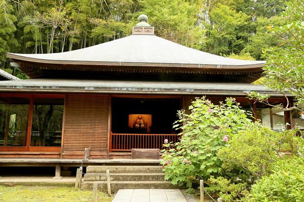 IMG_1160 東慶寺本堂の「フヨウ」