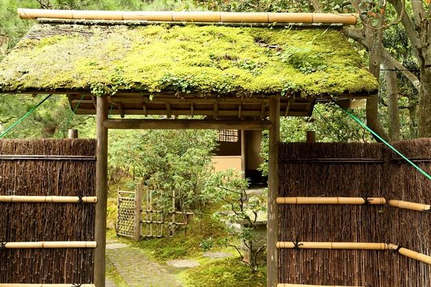 IMG_1177 東慶寺の茶室の門「苔」