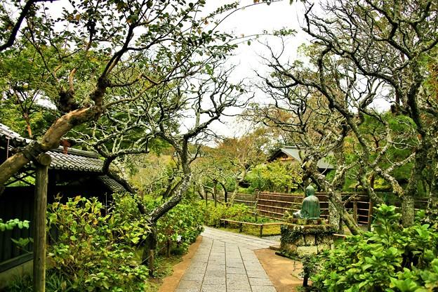 IMG_1311 東慶寺の水月堂近辺の庭