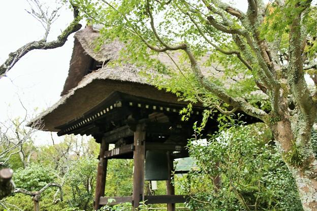 IMG_1339 東慶寺の青紅葉と鐘楼