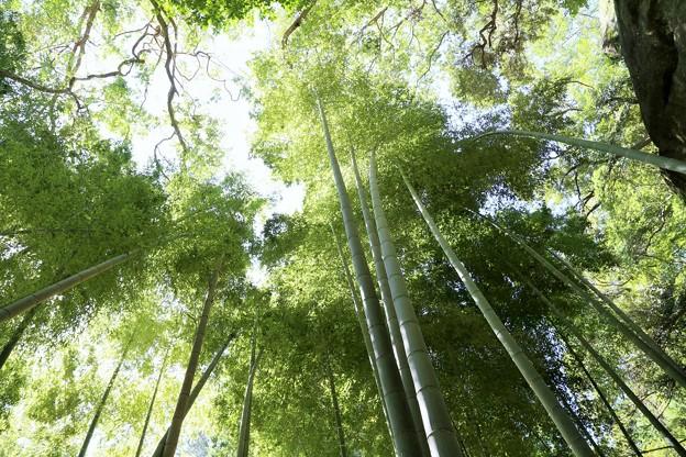IMG_1736 浄智寺・竹林の空を見れば