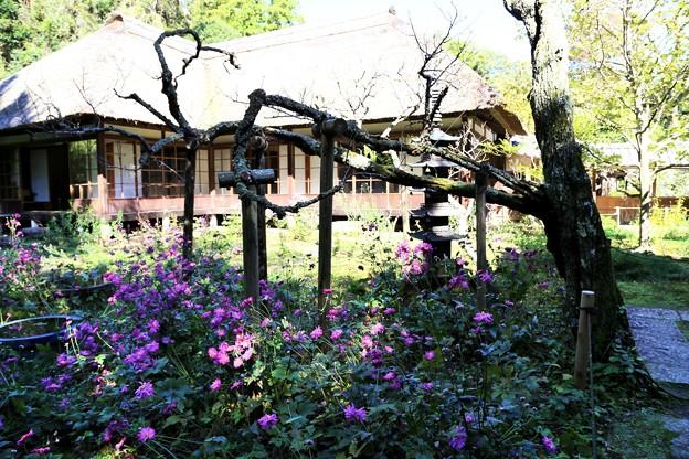 IMG_1777 浄智寺・和風庭園