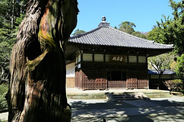 IMG_1827 浄智寺・本堂 曇華殿