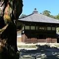 Photos: IMG_1827 浄智寺・本堂 曇華殿