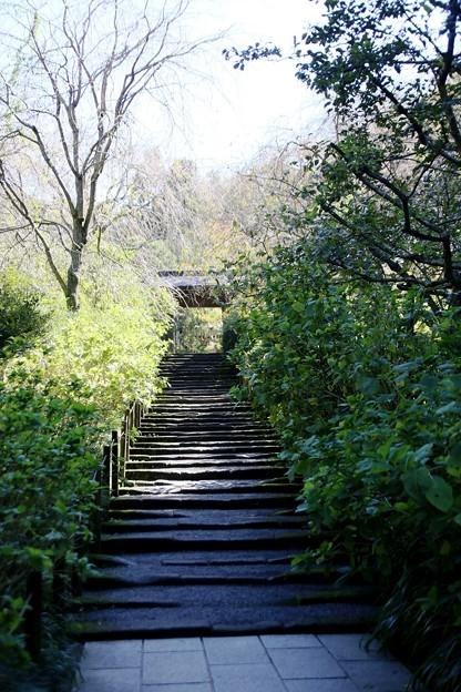 IMG_2096 明月院・山門への道