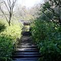 Photos: IMG_2096 明月院・山門への道