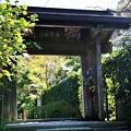 Photos: IMG_2111 明月院・山門