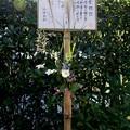 Photos: IMG_2198 明月院・ここにも生花