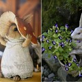Photos: IMG_2213  明月院だからウサギなの?-1