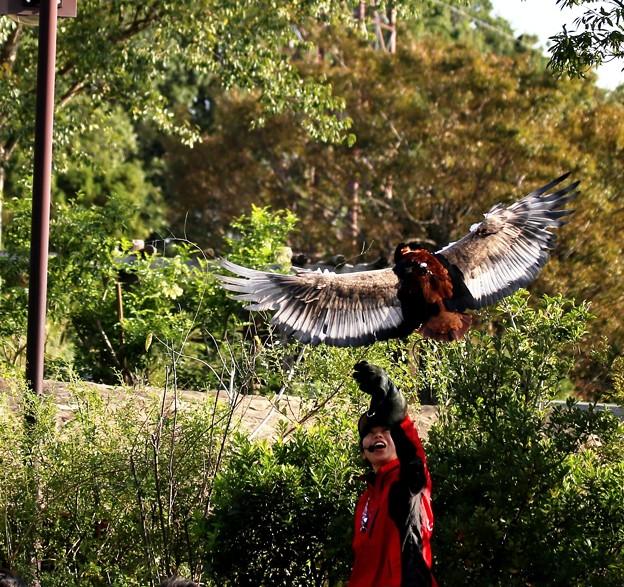 IMG_2728 ♪♪~翔んで、翔んで、翔んで~♪♪