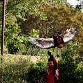 Photos: IMG_2728 ♪♪~翔んで、翔んで、翔んで~♪♪