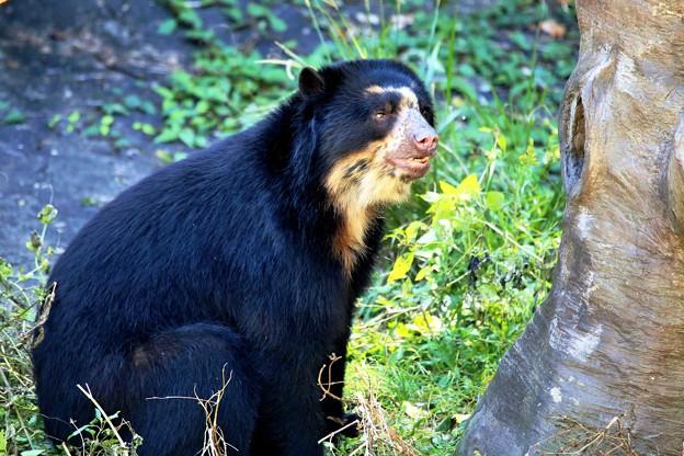 IMG_2379 白熊に変身中、ってそんなワケないやろ!