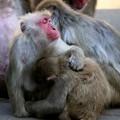 Photos: IMG_3904 多摩動物公園サル山の光景ー2