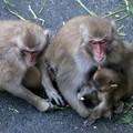 Photos: IMG_3903 多摩動物公園サル山の光景ー3