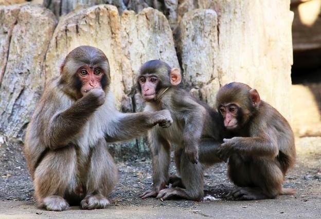 IMG_4732 仲よし三猿組