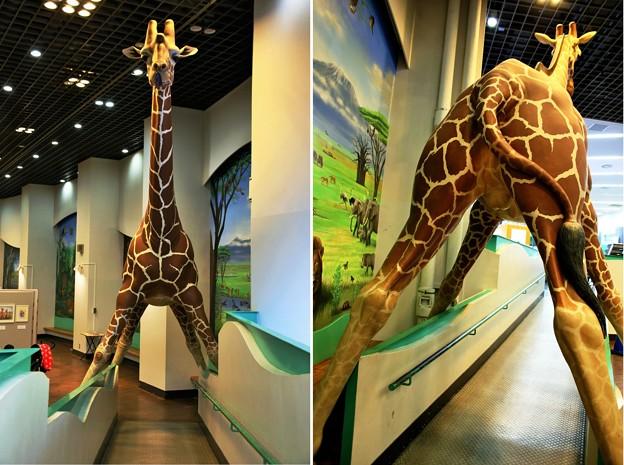 IMG_4659   多摩動物公園インフォメーションセンター&休憩所ー3