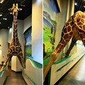 Photos: IMG_4659   多摩動物公園インフォメーションセンター&休憩所ー3