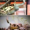 Photos: IMG_4638 多摩動物公園インフォメーションセンター&休憩所ー5