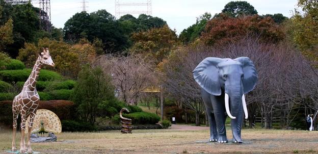 IMG_5545 よこはま【静】物園ー3