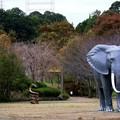 Photos: IMG_5545 よこはま【静】物園ー3