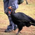 IMG_5203 働く鳥 ミナミジサイチョウ  ー2