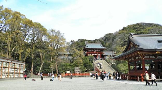 DSCN0198  鎌倉八幡宮・全景(3月撮影)
