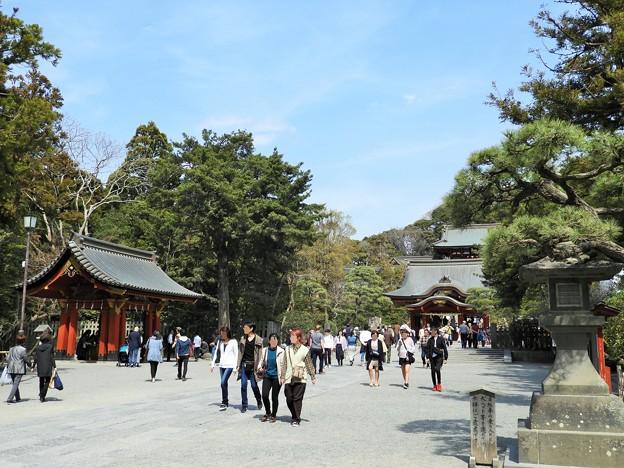 DSCN0208 鶴岡八幡宮・境内―1 (3月撮影)