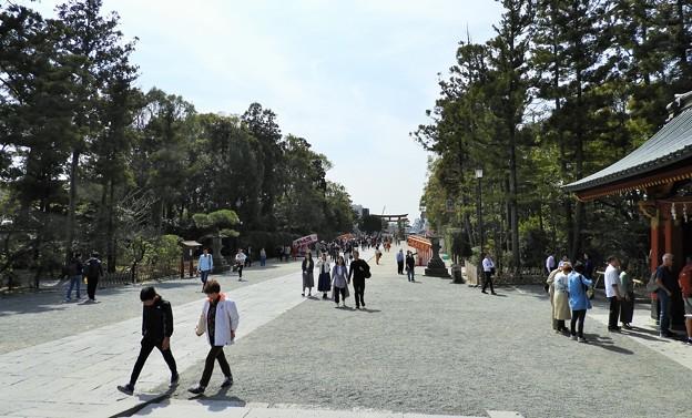 DSCN0207  鶴岡八幡宮・境内―2 (3月撮影)