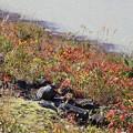 IMG_5769 湖岸の秋