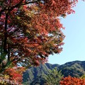 IMG_5627 丹沢湖周遊道路の紅葉