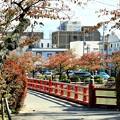 Photos: IMG_6011 小田原城お堀の秋