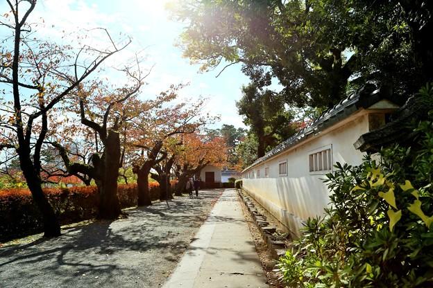 IMG_5828 二の丸通りにも忍者のように秋が忍び寄る