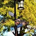Photos: IMG_6003 城址公園の道しるべ