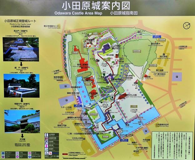 IMG_5829 小田原城案内図