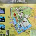 Photos: IMG_5829 小田原城案内図
