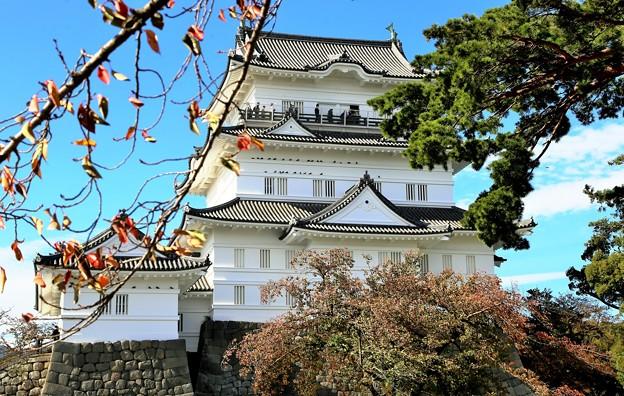 IMG_5999 秋 11月の小田原城