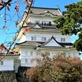 Photos: IMG_5999 秋 11月の小田原城